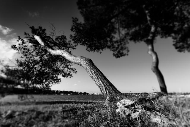 Bishop Trees
